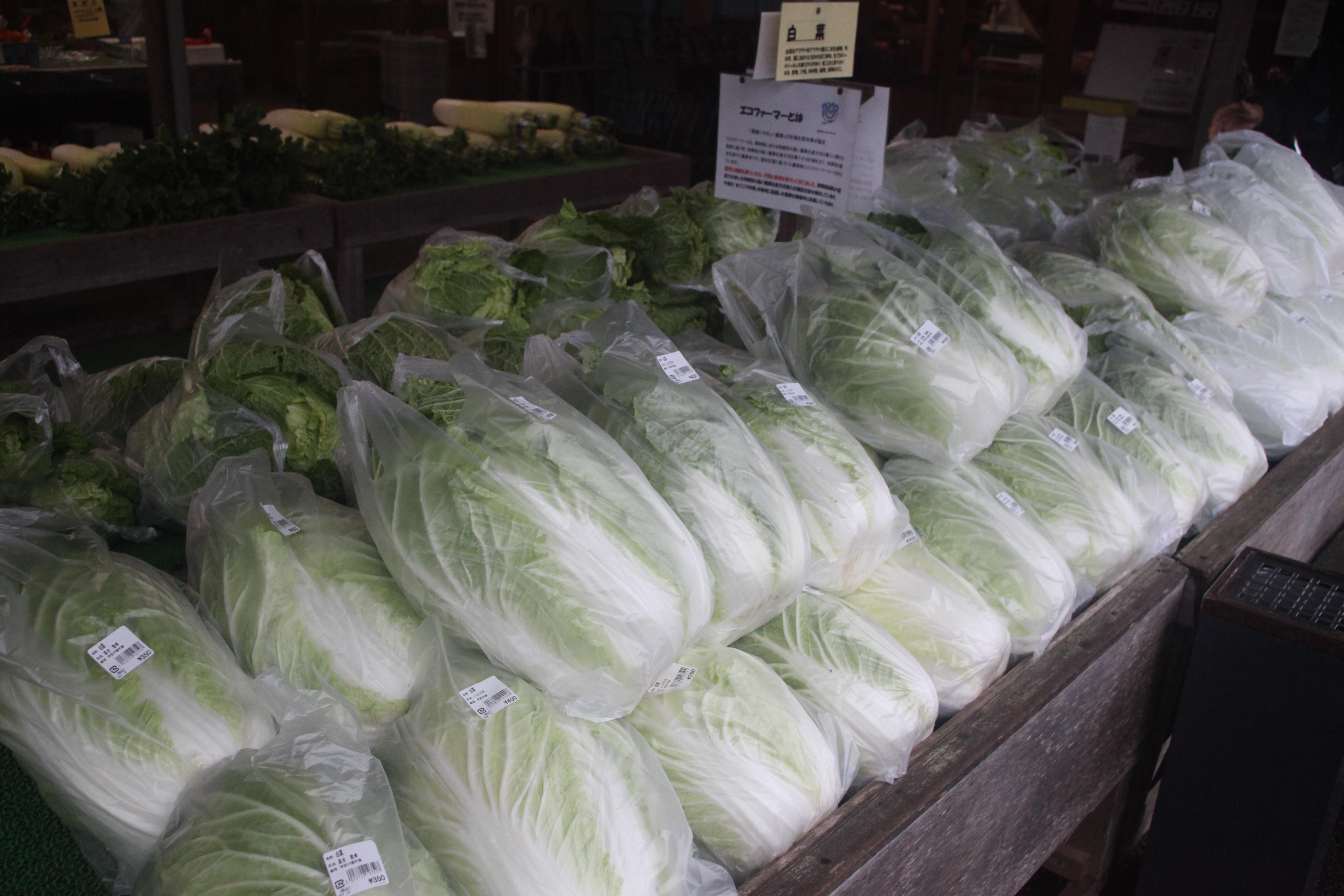 白菜・大根の入荷が増えてきました。
